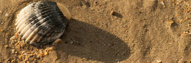 Coque rouge sur le sable à Frontignan plage. Photo © Alain Marquina