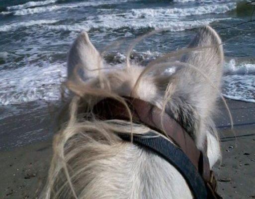Cheval en bord de mer